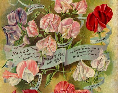 Lunch and Learn: 19th Century Gardening