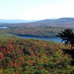 Forest Dynamics in the Monadnock Region