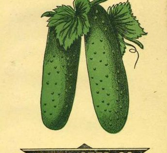 Forced Cucumber- June 2016 Recipe of the Month