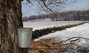 Hearth Cooking Saturday: Maple Syrup Recipes